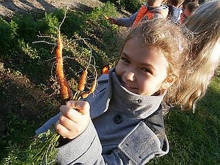 Melina Karottenernte 322x242