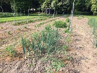 Gemüsegarten gesät 320x240