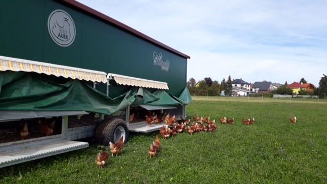 Mobiler Hühnerstall 2 640x320
